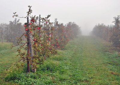 Automatisatie in de fruitteelt