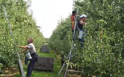 ACROFRUIT project wilt automatisatie van processen in de landbouw stimuleren